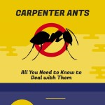 carpenter-ants-infographic-plaza