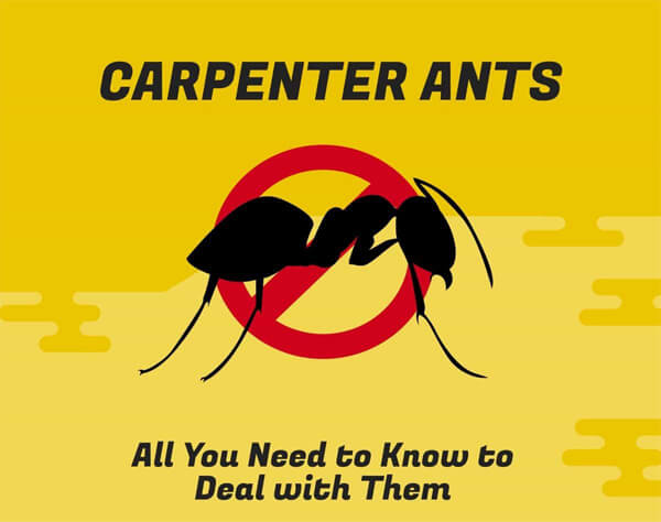carpenter-ants-infographic-plaza-thumb