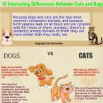 cats-and-dogs-differences-infographic-plaza