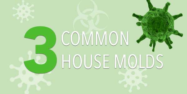 common-mold-infographic-plaza-thumb