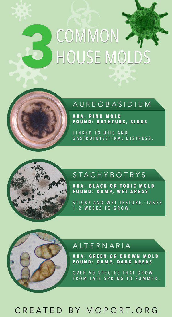 common-mold-infographic-plaza