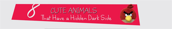cute-animals-hidden-dark-side-infographic-plaza-thumb