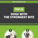 dogs-with-strongest-bite-infographic-plaza