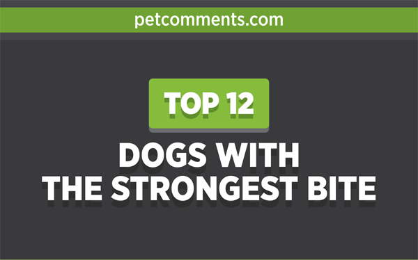 dogs-with-strongest-bite-infographic-plaza-thumb