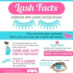 eyelash-facts-infographic-plaza