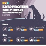 fat-protein-daily-recommendations-for-pets-infographic-plaza
