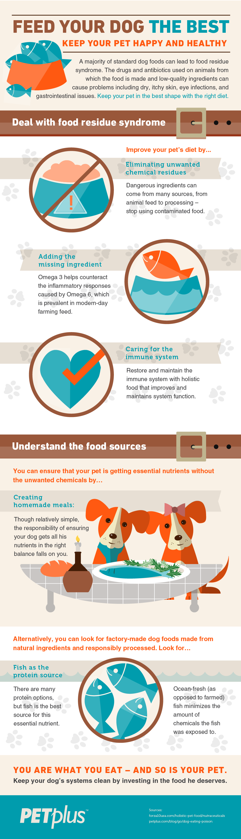 feed-your-dog-the-best-infographic