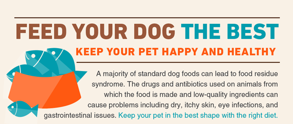 feed-your-dog-the-best-thumb