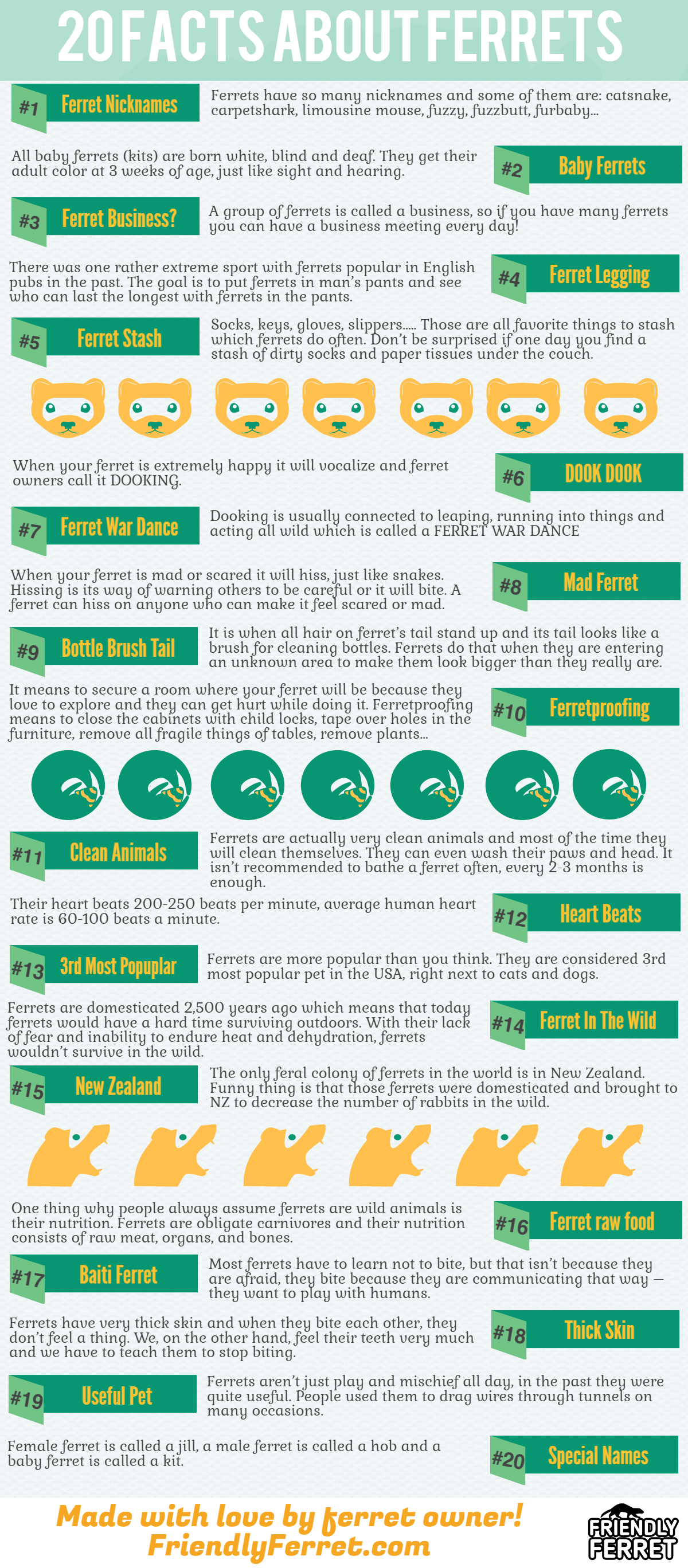 ferret-facts-infographic-plaza