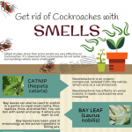 get_rid_of_cockroaches_natural_way-infographic