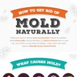 how-to-get-rid-of-mold-naturally-infographic-plaza