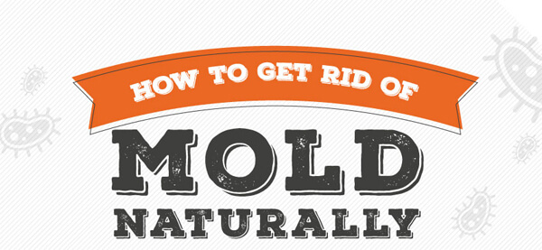 how-to-get-rid-of-mold-naturally-infographic-plaza-small
