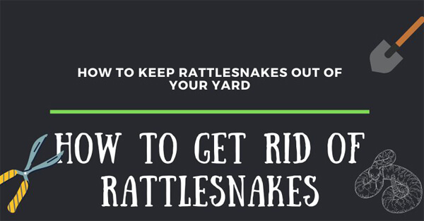 how-to-get-rid-of-rattlesnakes-infographic-plaza-thumb