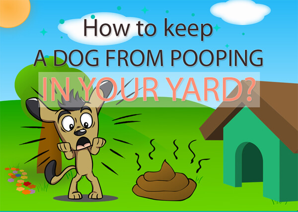 how-to-keep-a-dog-from-pooping-in-your-yard-infographic-plaza-thumb
