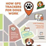 hund24-gps-tracker-dogs-infographic-plaza