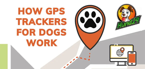 hund24-gps-tracker-dogs-infographic-plaza-thumb