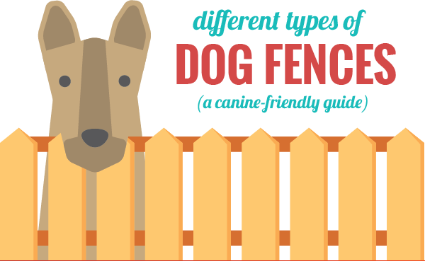 invisible-dog-fences-guide-thumb