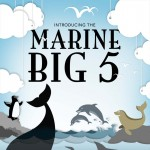 marine-big-5-infographic-plaza