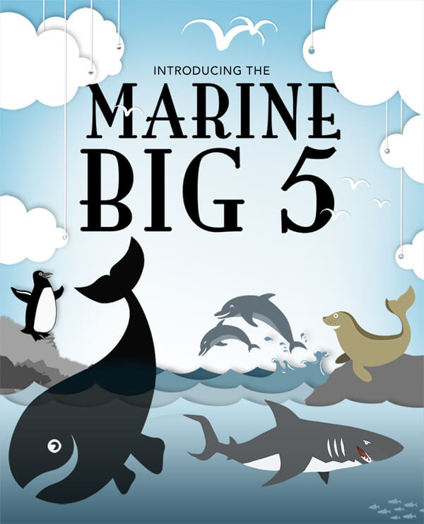 marine-big-5-infographic-plaza-thumb