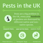 pests-in-uk-infographic-plaza