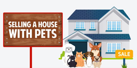 selling-house-with-pets-infographic-plaza-thumb