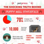 shocking truth about puppy mills-infographic-plaza