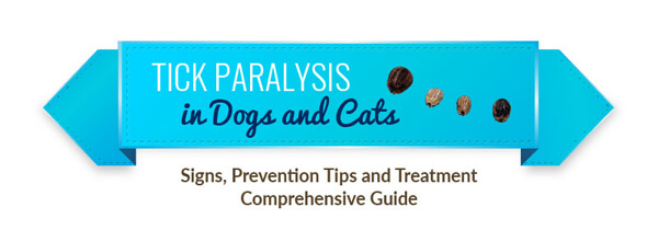 tick-paralysis-dogs-cats-infographic-plaza-thumb