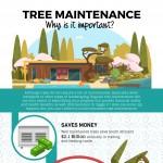 treefelling-tree-maintenance-infographic-plaza