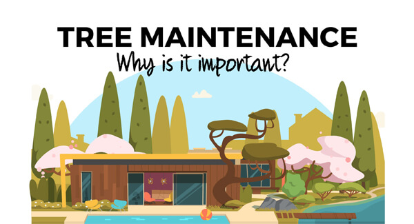 treefelling-tree-maintenance-infographic-plaza-thumb