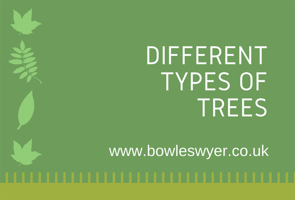 types-of-trees-infographic-plaza-thumb