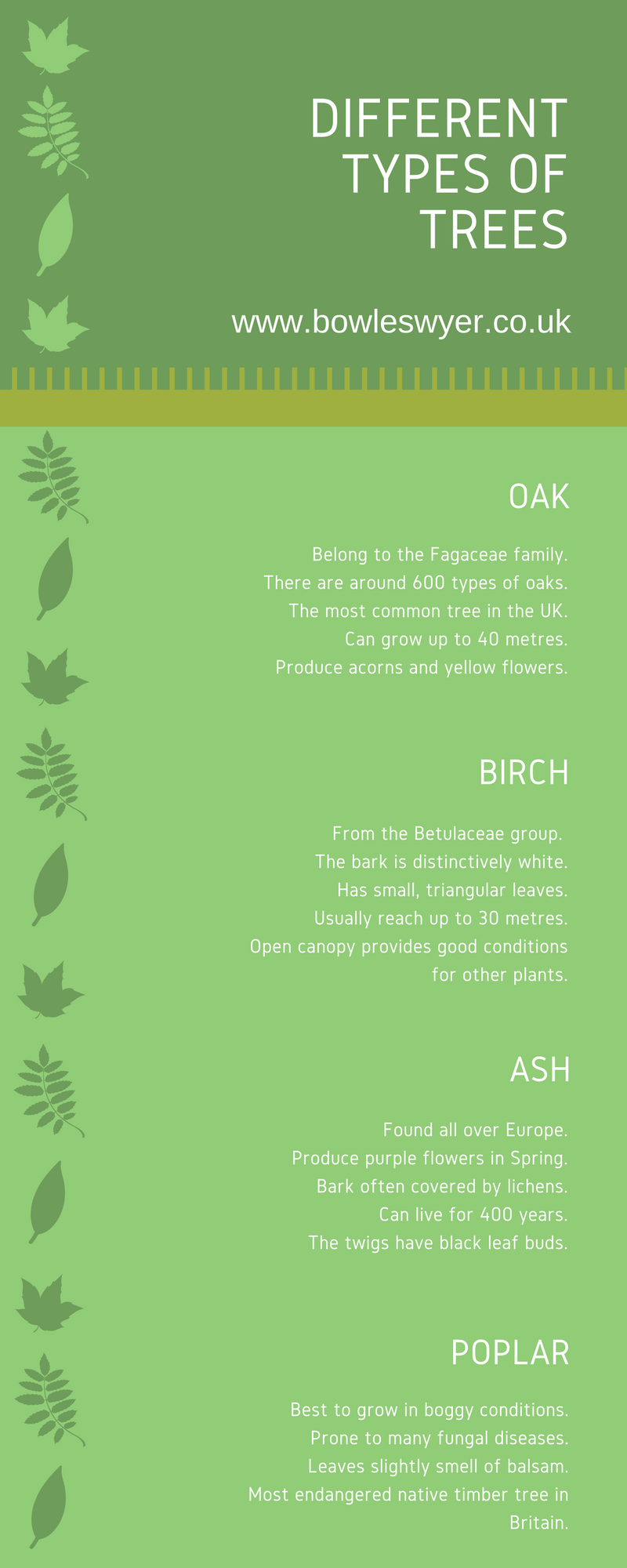 types-of-trees-infographic-plaza