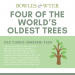 world-oldest-trees-infographic-plaza